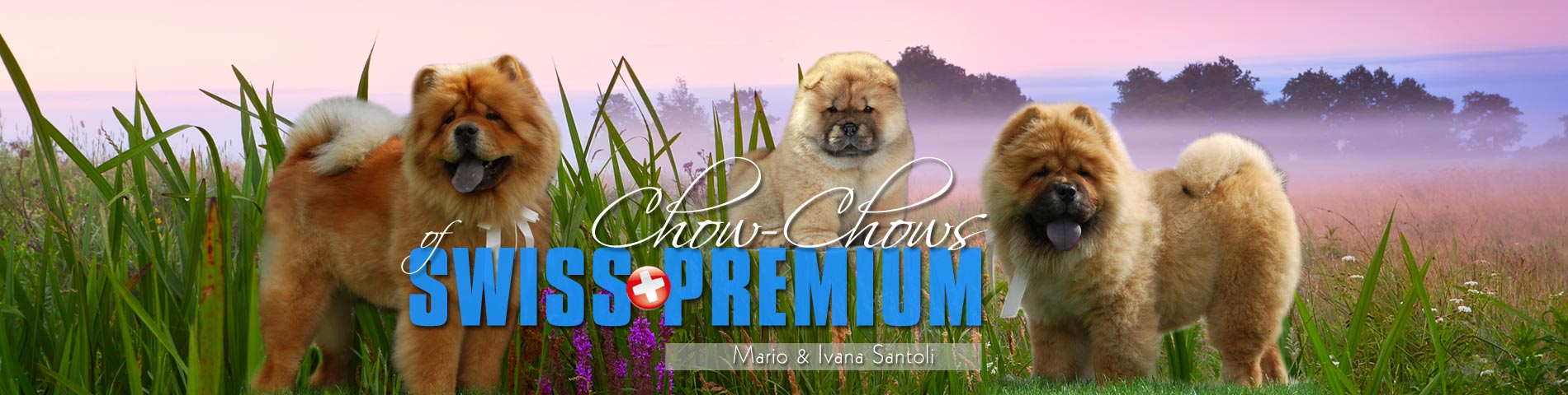 Of Swiss Premium Chow-Chows - Mario und Ivana Santoli, Schweiz