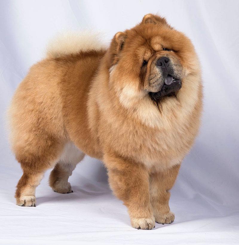 Fantastic Fortuna De Los Perros de Bigo